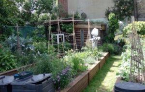 Cómo cultivar un huerto ecológico: 5 cosas que debes saber