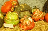 Cómo sembrar calabazas o zapallos turbante: Guía completa