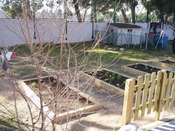 Aquí podéis ver los bonitos bancales del huerto del CEIP Gandhi