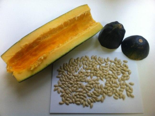 Semillas de calabacín (Fuente: www.lahuertadetoni.com)