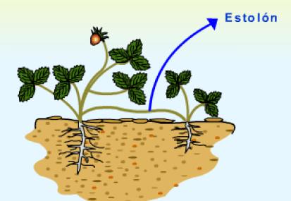 Obtener semillas o reproducir plantas