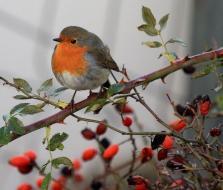 Cómo atraer pájaros al huerto ecológico: Pájaros beneficiosos