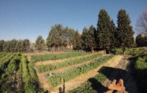 Huerto de Agrofogones: El huerto de la Universidad de Agrónomos