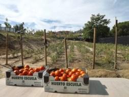Huertos Terapéuticos | El huerto ecológico de la Fundación Trébol