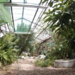Aula verde invernadero: Chiles, Amaranto y más