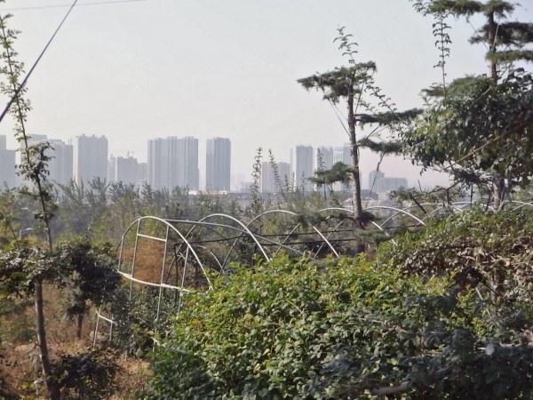 Técnicas de agricultura ecológica