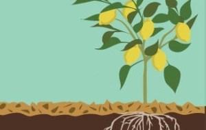 Tipos de Mulching o acolchados orgánicos: Guía completa con fotos