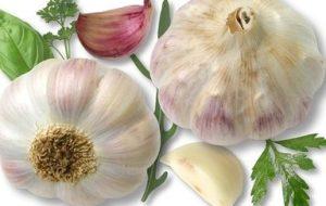 Cómo Cultivar Ajo en el Huerto: Desde la siembra hasta la cosecha