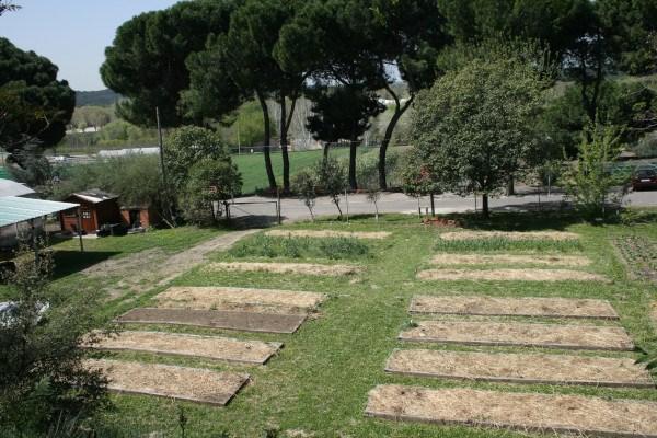 El acolchado es una buena opción para el huerto durante el invierno