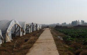 Agricultura Periurbana: un negocio turístico en China