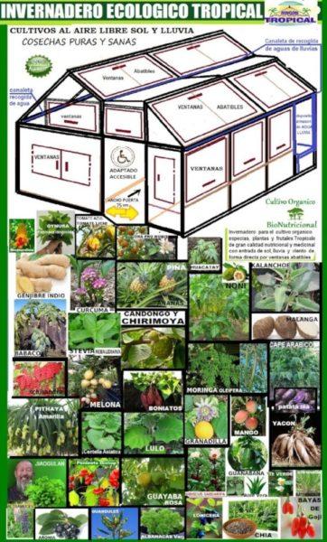 Iniciativas ecológicas: invernadero tropical