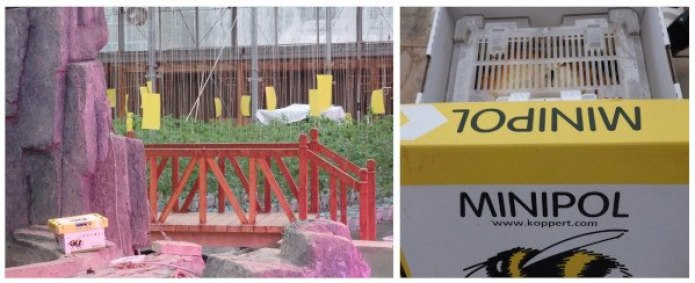 Polinización mediante abejorros en China