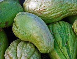 Plagas y Enfermedades del Chayote: Guía Completa con fotos