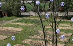 Invierno: 7 cosas que podemos hacer en el huerto