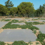 Solarización del suelo. Desinfección ecológica con cubiertas plásticas