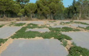 Solarización del Suelo. Desinfección Ecológica con plástico