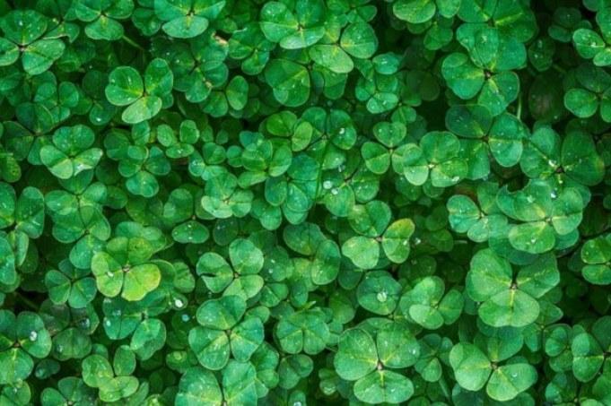 fertilizantes ecológicos y naturales