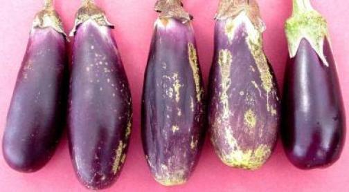 Daños causados en los frutos por trips