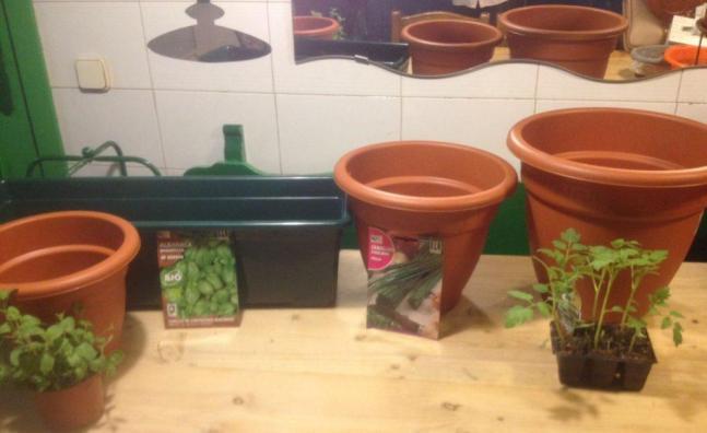 cómo cultivar plantas aromáticas en macetas