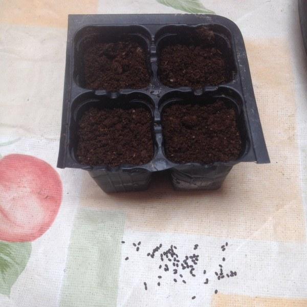 semilleros para cultivar aromáticas
