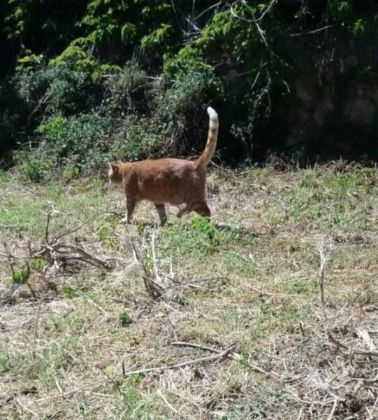 Gato en el huerto