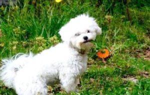 6 Maneras de alejar las mascotas del huerto. Consejos prácticos