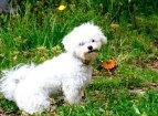 Cómo alejar a las mascotas del huerto: 6 Consejos prácticos