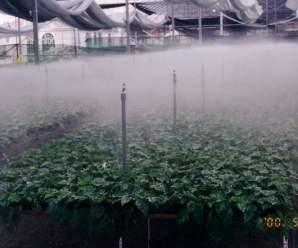 Fog system o riego por nebulización