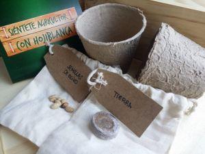 Cómo plantar un Olivo en el Huerto: Guía completa de las etapas
