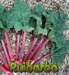 Cómo cultivar ruibarbo en el huerto paso a paso: Guía completa