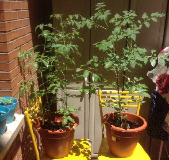 huerto en jardineras