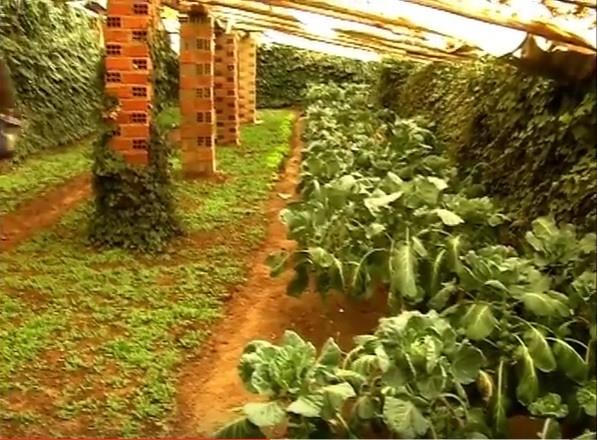 huertos subterráneos en Bolivia