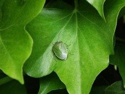 Bichos verdes en las plantas: Guía completa con fotos