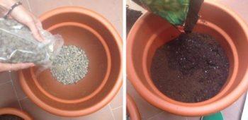 Preparando las macetas para el trasplante de romero