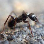 Bichos en la tierra del huerto: ¿Qué insectos viven en la tierra?