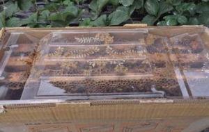 Cómo atraer abejas y otros polinizadores beneficiosos para el huerto