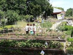 Jornadas sobre huertos ecológicos y biodiversidad. Educación Ambiental