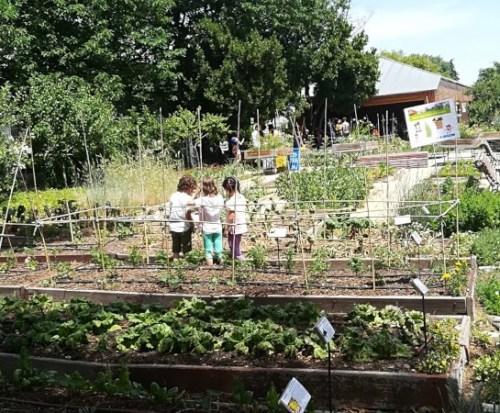 beneficios de los huertos escolares
