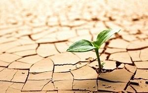 Estrés hídrico en plantas: ¿Por qué mis plantas se secan?