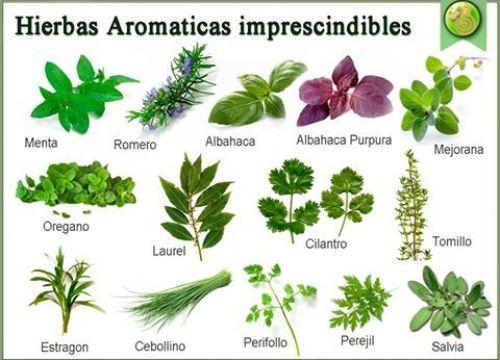 plantas aromáticas para el huerto