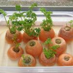 Recrecer zanahorias paso a paso