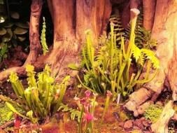 Plantas carnívoras: 4 plantas que nos ayudan a controlar las plagas