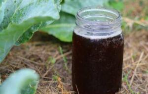 Té de Compost o Compost tea: Aprende a hacerlo paso a paso