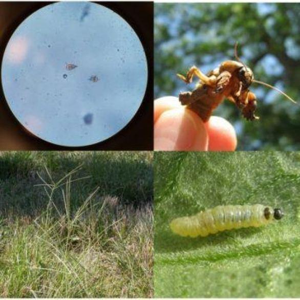 Organismos bioagresores de las plantas.