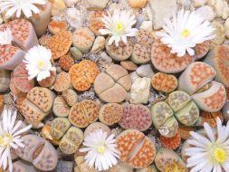 5 Plantas originales y bonitas para regalar: Éxito asegurado