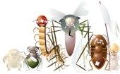 Insectos comunes del huerto y del jardin: Las 11 plagas más dañinas