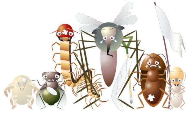 insectos comunes y tipos de plagas más dañinas del huerto y el jardín