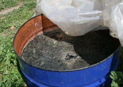 Insecticida natural en maceración hecho a base de cola de caballo