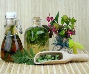 Insecticidas naturales para luchar contra plagas en el huerto ecológico
