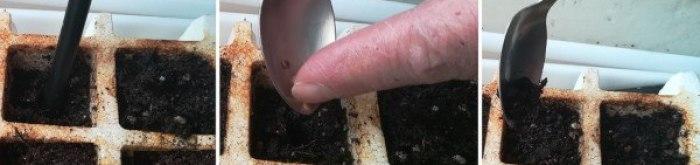 cómo hacer semilleros de aromáticas